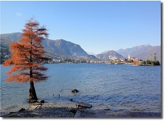 Lake Maggiore (alanpeacock2) Tags: trees italy mountains water lakes lakemaggiore pixplor