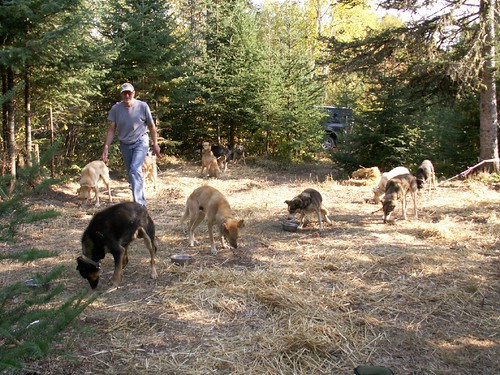 Neil and dogs