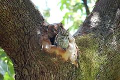 sc'owl!.JPG
