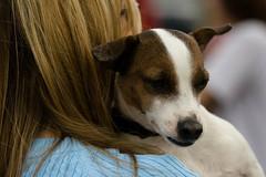 Dog Whisperer comes to MN (WasabiDoobie) Tags: dog pet book cesar mn signing 2007 millan woodbury whisperer