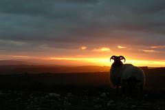 Irish sunset.