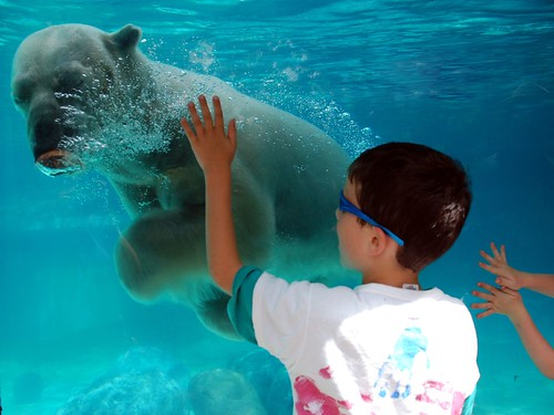 Petting a Polar Bear in July. Seems crazy, but it's true!