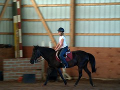 cqw and jet black (nosha) Tags: horses horse nj riding jetblack cqw goneawayfarm