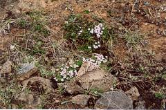 fleurs (alain_borie) Tags: iceland 2006 christophe alain patrol islande vro elose gadic 650dr