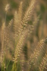 Windy Whispers (julie_h) Tags: plant garland d80 18135mm