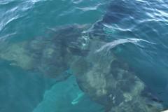 tail underwater