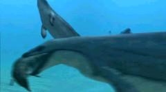海洋动物大档案】【海洋生物吧】_百度贴吧