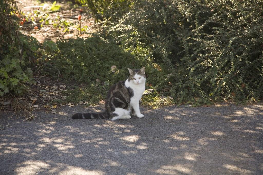 CAT IN THE BOTANIC GARDENS