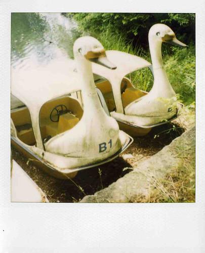 swan B1