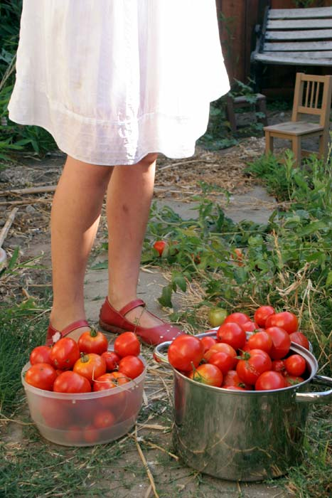 Esther vs. the Tomatoes