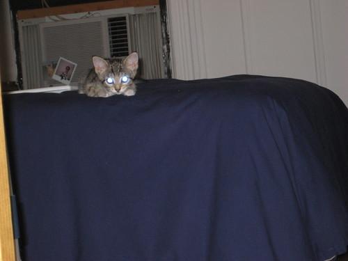 lyla has laser eyes