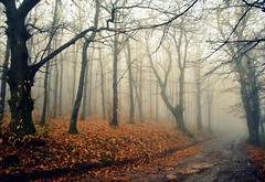 ..e il tempo piega all'inverno.... (Claudia Gaiotto) Tags: trees italy nature leaves fog foglie alberi forest atmosphere tuscany nebbia bosco idream monteserra