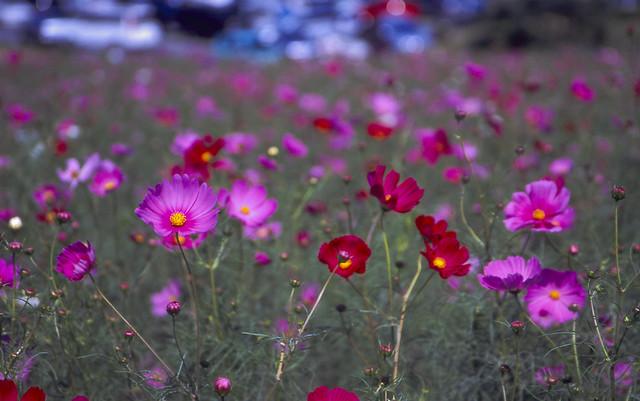 薄紫の花のフリー写真素材