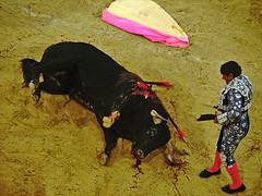 last moment of life (_tonidelong) Tags: españa death spain fiesta andalucia muerte bullfighter granada toros corpus bullfight torero puntilla puntillero