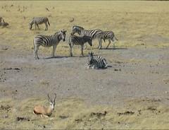 2658 (satinam2) Tags: africa botswana namibia himba