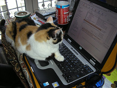 Mimi the geek cat
