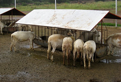 Covered feed bunk