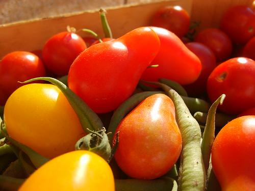 Petite Tomate en Forme de Poire Red Pear