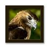Portrait of Hawk (nailbender) Tags: bird hawk raptor frame naturesfinest nailbender specanimal animalkingdomelite specanimalphotooftheday joewheelerwildliferefuge lightstylus jdmckinnon