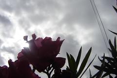 (Realidades subjetivas) Tags: natural rayosdesol florescontraluz