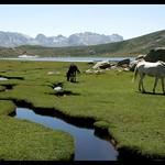 chevaux du lac de Nino