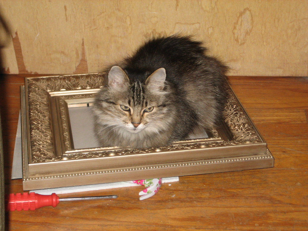 who framed my kitty cat??