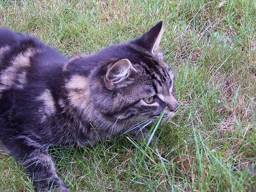 Lucy bug hunting