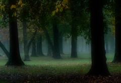Where's Golidlocks? (Zsaj) Tags: morning autumn trees mist fog dark woods maryland topofthefog tenebrific themagicwood
