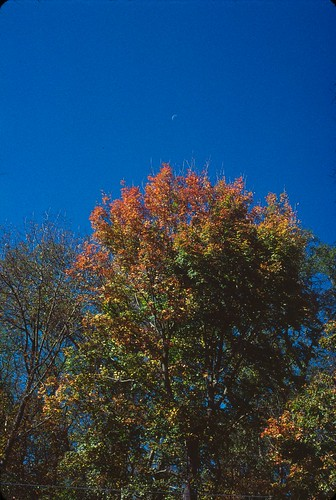 Kodachrome 2010 Fall Foliage