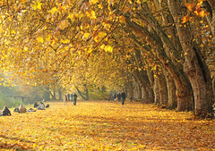 Golden carpet of leaves (Habub3) Tags: park city travel bridge autumn light shadow people sun holiday plant flower tree fall texture nature leaves yellow forest germany landscape deutschland gold vanishingpoint leaf search flora nikon bravo europa europe map path walk urlaub laub herbst natur pflanze foliage explore gelb stadt brcke blatt landschaft wald bltter frontpage bume soe baum vacanze weg 2010 allee spaziergang tbingen mensch d300 platanen serach naturepoetry platanenallee mywinners abigfave colorphotoaward interesstingnes theunforgettablepictures habub3 doubleniceshot theoriginalgoldseal blinkagain aboveandbeyondlevel1