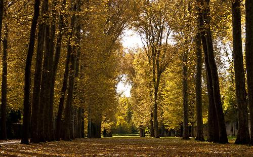 Versailles by Vic Riedemann