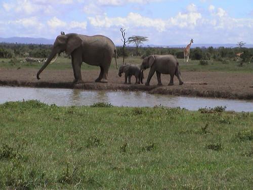 SW Elephant Family
