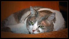 """Pitufo, un gato """"Zen"""" por Monica2362"""