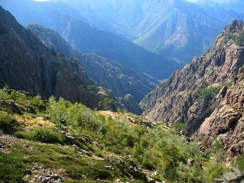 Les replats herbeux de Campu di Vetta vers la bergerie supposée