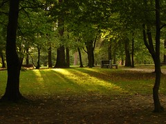 light (miradel) Tags: park trees light green nature view poland september narnia bialystok podlasie