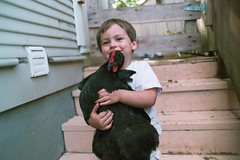 truman and his chicken (cafemama) Tags: chicken august hen truman mathilda 2007 australorp trumanhanson urbanchicken august2007 urbanchickens familygetty2010