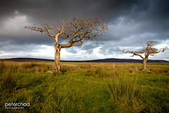 I_love_trees_2 (PeterChad) Tags: uk light england storm tree nature grass dead outside death mirror golden solitude alone sundown decay bare lancashire explore hour bleak lonely nightmare tt moor dying leafless drama fp frontpage tranquil regeneration bough treesubject welcomeuk