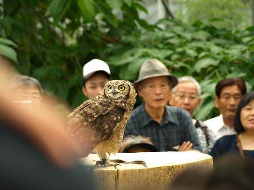 神戸花鳥園 (52)