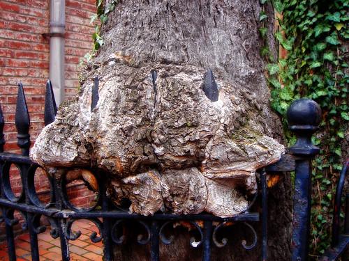 tree-fence-fusion