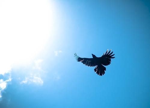 As the crow flies  Wikipedia