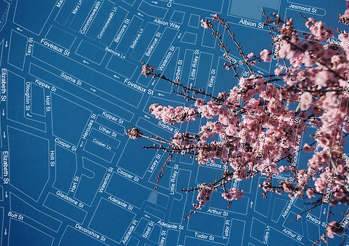 map with cherry blossoms