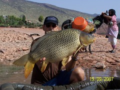 32 lbs common, the pink lady and a donkey