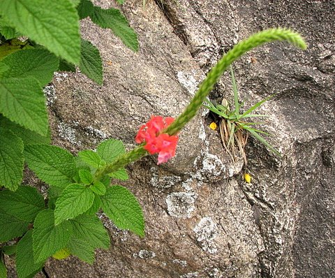 wild flower on the rock