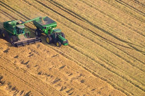 Rice Harvest near Yuba City