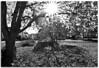 (Antonio Carrillo (Ancalop)) Tags: bw españa sun white black blanco sol canon spain europa europe negro bn tokina otoño autunm albacete tokina1224mm nerpio ancalop