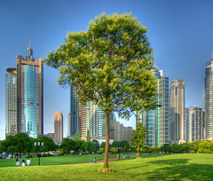 CHINA - Shanghai - Lone tree surrounded by skyscrapers HDR (Franck -  - ) Tags: china city blue urban tree green nature leaves skyscraper wow garden leaf shanghai sony   pudong    hdr              supershot flickrsbest dslra100 alpha100 abigfave   ultimateshot irresistiblebeauty treesubject