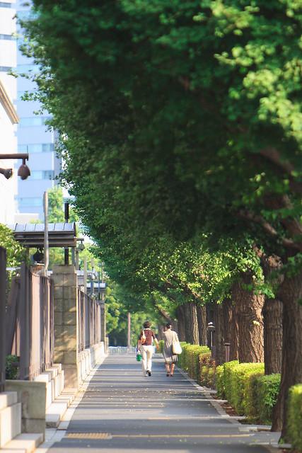 街路樹の並び