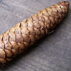 patterned cone (spryngtree) Tags: brown game nature line sprucecone