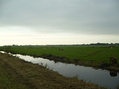 dutch landscape (rob20) Tags: morning dutch landscape onderderookvanamsterdam