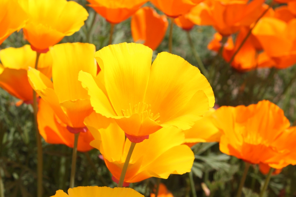 A Japan photo:Ashikaga Flower Park,Tochigi